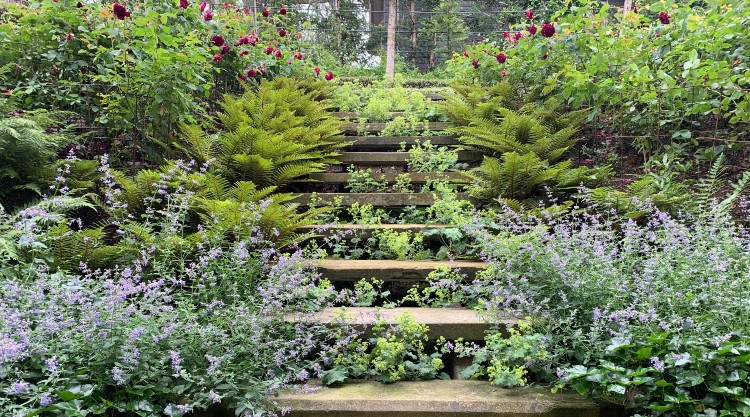 Steps and Plants