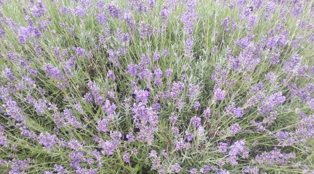 July News – Flowers Flourish